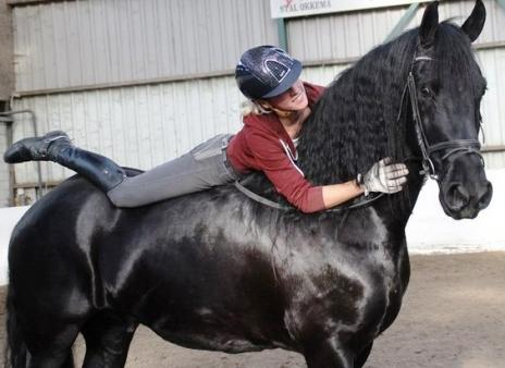 Friesians For Sale